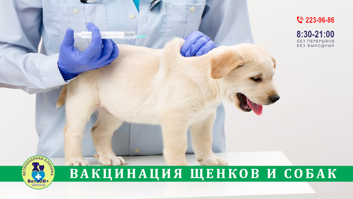 Вакцинация щенков и собак в Челябинске
