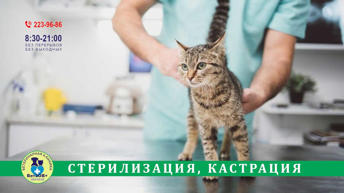 Стерилизация, кастрация кошек в Челябинске