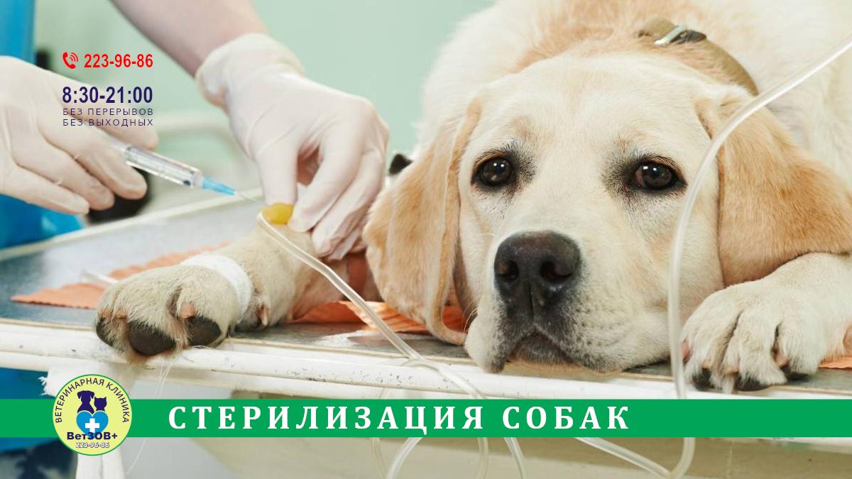 Стерилизация кастрация собак Челябинск