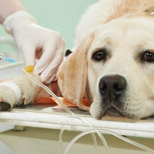 Стерилизация / кастрация собак