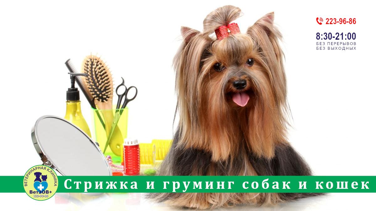 Стрижка и груминг собак и кошек