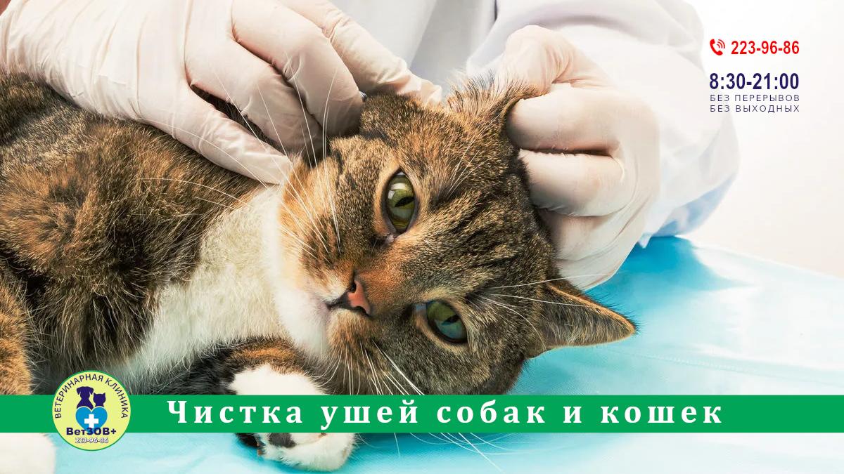 Чистка ушей собак и кошек Челябинск