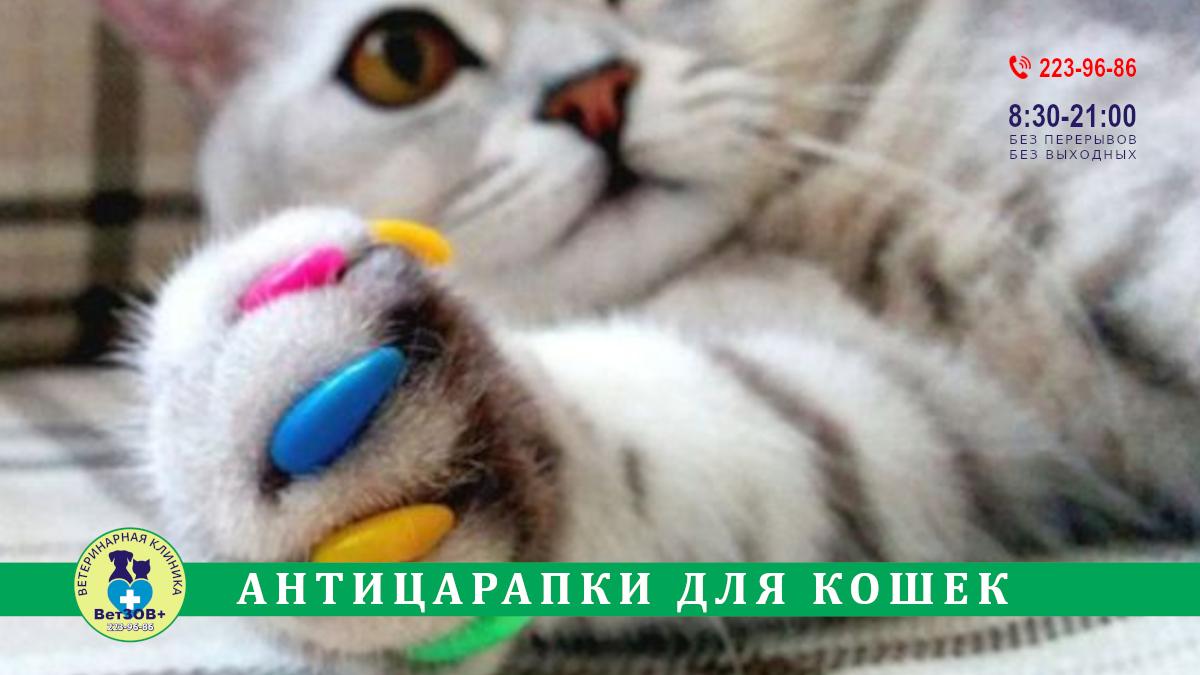 Антицарапки кошкам Челябинск