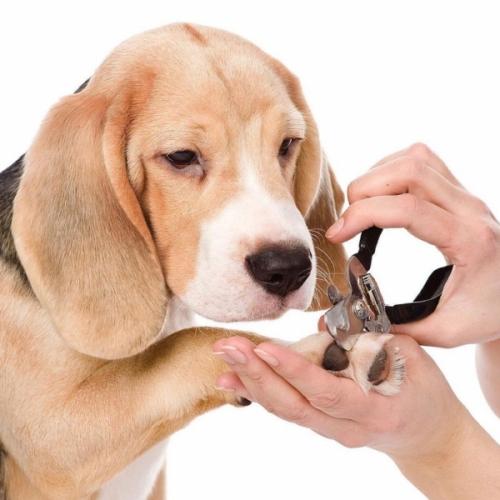 Обрезка/стрижка когтей собаке