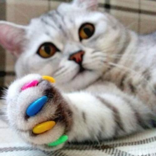 Наклейка антицарапок для кошек