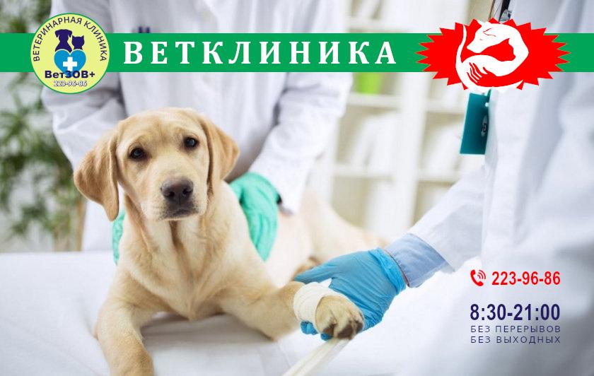Ветеринарная клиника ВетЗов+
